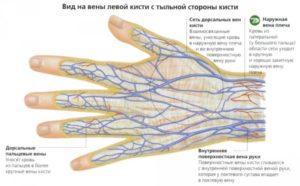 строение вен на кистях рук